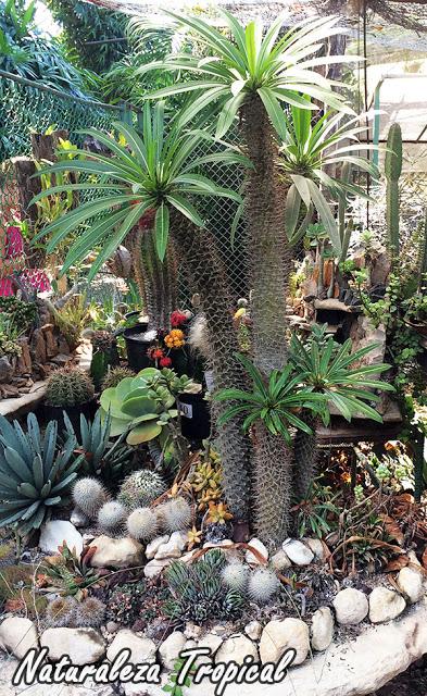 Crea Tu Propio Desierto Para Decorar Tu Jardín
