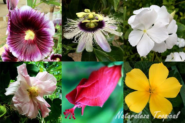 Plantas ornamentales con propiedades medicinales for Origen de las plantas ornamentales