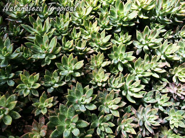 Ideas Para Decorar Con Plantas Suculentas