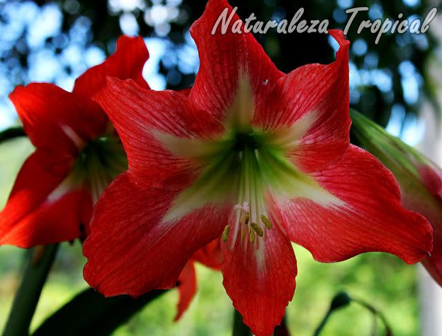 Galer a fotogr fica de flores de plantas ornamentales for Que son plantas ornamentales