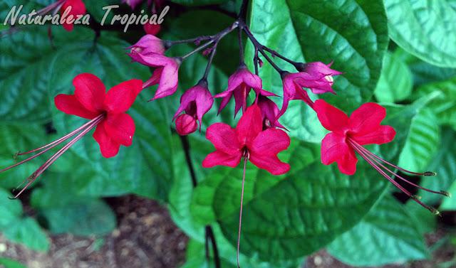 Ventajas y desventajas de los hibridos en plantas