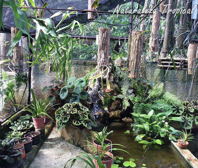 Ventajas de instalar un estanque en el jard n for Estanque para jardin casero