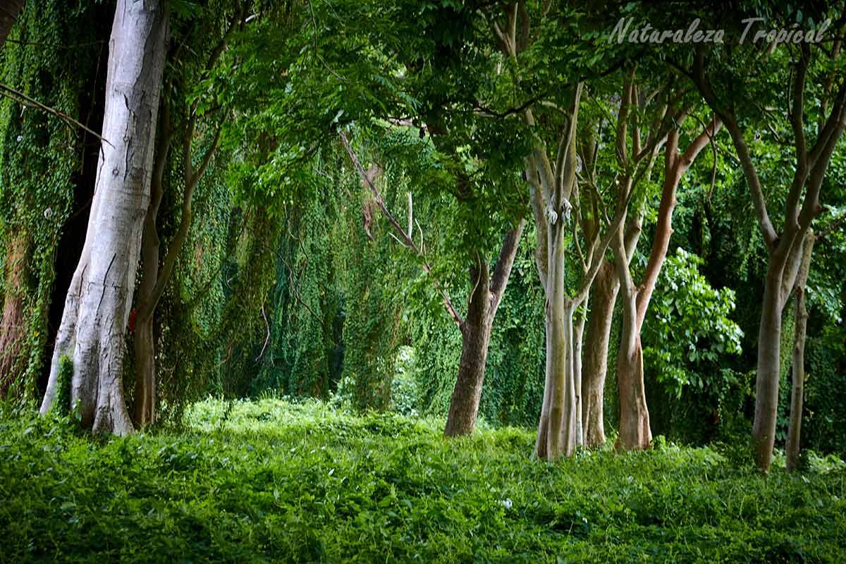 Proyectos que protegen nuestras selvas